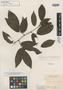 Machaerium schomburgkii Benth., BRITISH GUIANA [Guyana], R. H. Schomburgk 327, Isotype, F