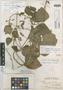 Phaseolus polyanthus Greenm., MEXICO, C. R. Barnes 20, Holotype, F