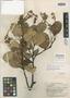 Zollernia kanukuensis R. S. Cowan, BRITISH GUIANA [Guyana], A. C. Smith 3144, Isotype, F