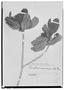 Field Museum photo negatives collection; Wien specimen of Ternstroemia emarginata Choisy, BRITISH GUIANA [Guyana], F. L. Splitgerber, Type [status unknown], W