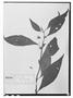 Field Museum photo negatives collection; Wien specimen of Salvia axilliflora Epling, VENEZUELA, J. W. K. Moritz 167, Type [status unknown], W