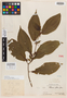 Clidemia foliosa Gleason, Peru, Ll. Williams 933, Isotype, F