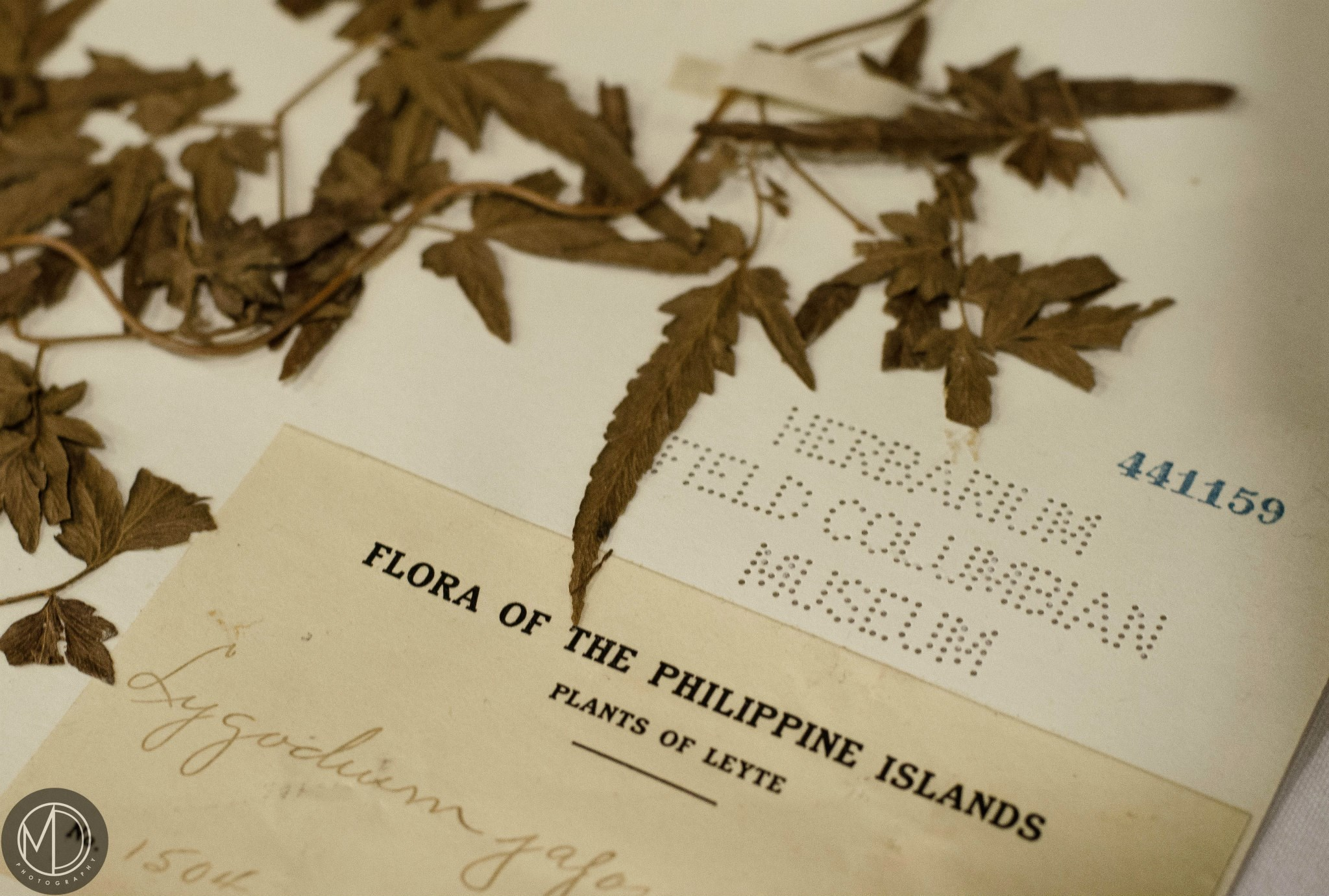 Close up of botanical specimens borrowed from the Botany collection for display.