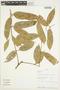 Protium Burm. f., Ecuador, A. H. Gentry 80839, F