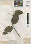 Anelasma guianense Miers, Guiana [Guyana], R. H. Schomburgk 440, Isotype, F