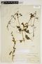 Amphilophium cynanchoides (DC.) L. G. Lohmann, ARGENTINA, A. P. Rodrigo 252, F