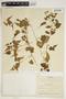 Amphilophium cynanchoides (DC.) L. G. Lohmann, ARGENTINA, C. A. O'Donell 468, F