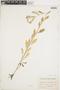 Rorippa palustris (L.) Besser, Canada, J. P. Fowler, F