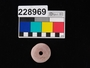 228969 ceramic spindle whorl