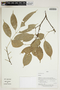 Herbarium Sheet V0414230F