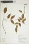 Herbarium Sheet V0414231F