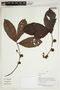 Herbarium Sheet V0414245F