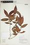 Herbarium Sheet V0414303F