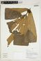 Herbarium Sheet V0414336F