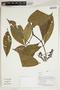 Herbarium Sheet V0414392F