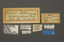 42984 Colias elis HT labels IN