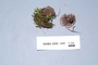 North American Mycological Association Foray : specimen # NAMA 2006-049
