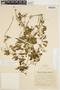 Amphilophium cynanchoides (DC.) L. G. Lohmann, ARGENTINA, M. Villafañe 126, F