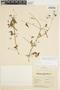Amphilophium cynanchoides (DC.) L. G. Lohmann, ARGENTINA, M. R. Malvarez 255, F