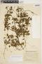 Amphilophium cynanchoides (DC.) L. G. Lohmann, ARGENTINA, A. M. R. Huidobro 3114, F