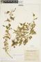 Amphilophium cynanchoides (DC.) L. G. Lohmann, ARGENTINA, A. R. Cuezzo 712, F