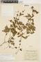 Amphilophium cynanchoides (DC.) L. G. Lohmann, ARGENTINA, A. R. Cuezzo 910, F
