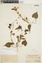 Amphilophium cynanchoides (DC.) L. G. Lohmann, ARGENTINA, E. S. Riggs 122, F