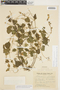 Amphilophium cynanchoides (DC.) L. G. Lohmann, ARGENTINA, A. M. R. Huidobro 4297, F