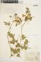 Amphilophium cynanchoides (DC.) L. G. Lohmann, URUGUAY, C. Fruchard, F