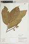 Herbarium Sheet V0387509F