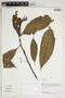 Herbarium Sheet V0414450F
