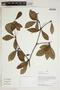 Herbarium Sheet V0414470F