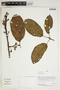Herbarium Sheet V0414508F