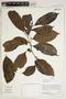 Herbarium Sheet V0414539F