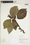 Herbarium Sheet V0414637F