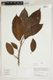 Herbarium Sheet V0414658F