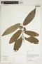 Herbarium Sheet V0414680F