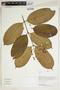 Herbarium Sheet V0414696F