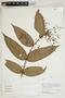 Herbarium Sheet V0414698F