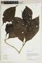 Herbarium Sheet V0414784F