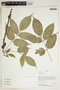 Herbarium Sheet V0414812F