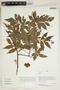 Herbarium Sheet V0414813F