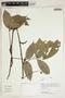 Herbarium Sheet V0414814F