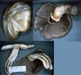 North American Mycological Association Foray : specimen # NAMA 1997-138