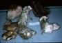 North American Mycological Association Foray : specimen # NAMA 1997-236