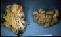 North American Mycological Association Foray : specimen # NAMA 1997-240