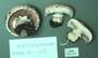 North American Mycological Association Foray : specimen # NAMA 1998-072