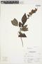 Salvia florida Benth., Peru, A. Sagástegui A. 16826, F