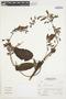Salvia L., Peru, A. Sagástegui A. 16328, F