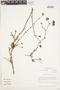 Eremocharis fruticosa image